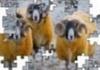 Jigsaw - Yellow Aries