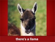 Lama song