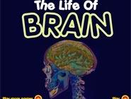 Life of brain