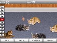 Réveil de chats