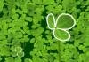 Search for the four-leaf clover